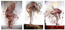 vignettes_acrobates