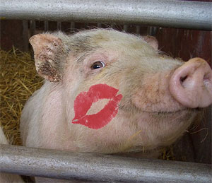 pig_kiss[1]